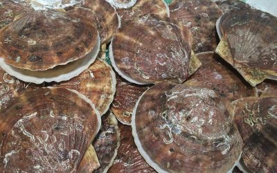 2019 Atlantic Sea Scallop Proposed Management Measures